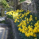 lane of daffodils by Peter Barrett