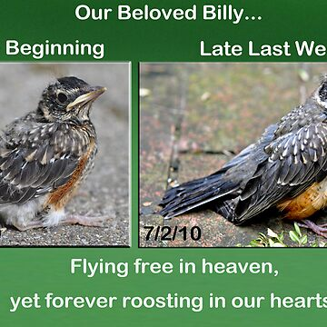In Memory Of Billy... by Ainsleyrk