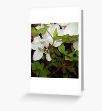 Another Garden Admirer Greeting Card