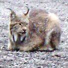 Lynx! by copperhead
