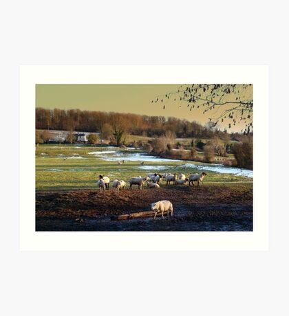 Shetland Art Print