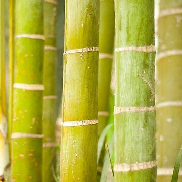 Bamboo by Siemek
