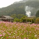 Japanese windflowers, Ohara Village, Kyoto. by johnrf