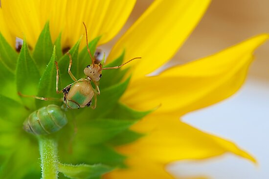 Study of Green Ant #4 by Mukesh Srivastava