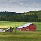 Barns on the Nez Perce Reservation  by Albert Dickson