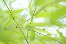 Bamboo lines by aMOONy