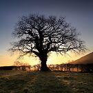 Oak Tree Glastonbury Tor by Angus Clyne