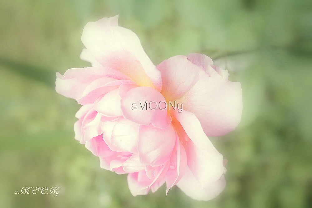 Rose collection 7 by aMOONy