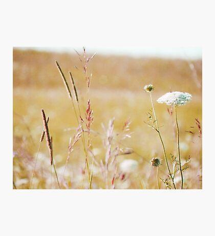 summer grass 19 Photographic Print