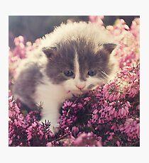 Blue Eyed Kitty Photographic Print