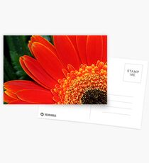 Gerbera Daisy in Brilliant Orange Postcards