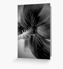 Poppy - Behind the Colour Greeting Card