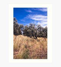 Crete's olives Art Print