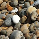 Pebbles on the Beach by shane22