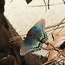 Red Spotted Purple by Luann Gingras