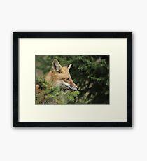 Backyard Fox Framed Print