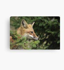Backyard Fox Canvas Print