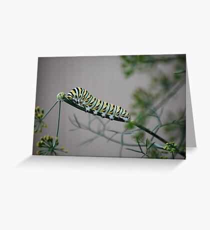 Swallowtail Caterpillar in Kansas Greeting Card