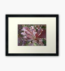 Red Plant Framed Print