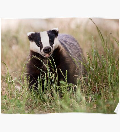 The Happy Badger Poster