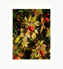 Autumn Rosehips Art Print