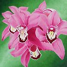 Pink Orchids by Laura Dhir