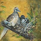 Peaceful dove and nestling (Geopelia placida) by TallabeenaArt