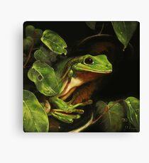 Green tree frog (Litoria caerulea) Canvas Print