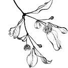 Blossoms (Austromyrtus) by TallabeenaArt