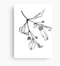 Blossoms (Austromyrtus) Canvas Print
