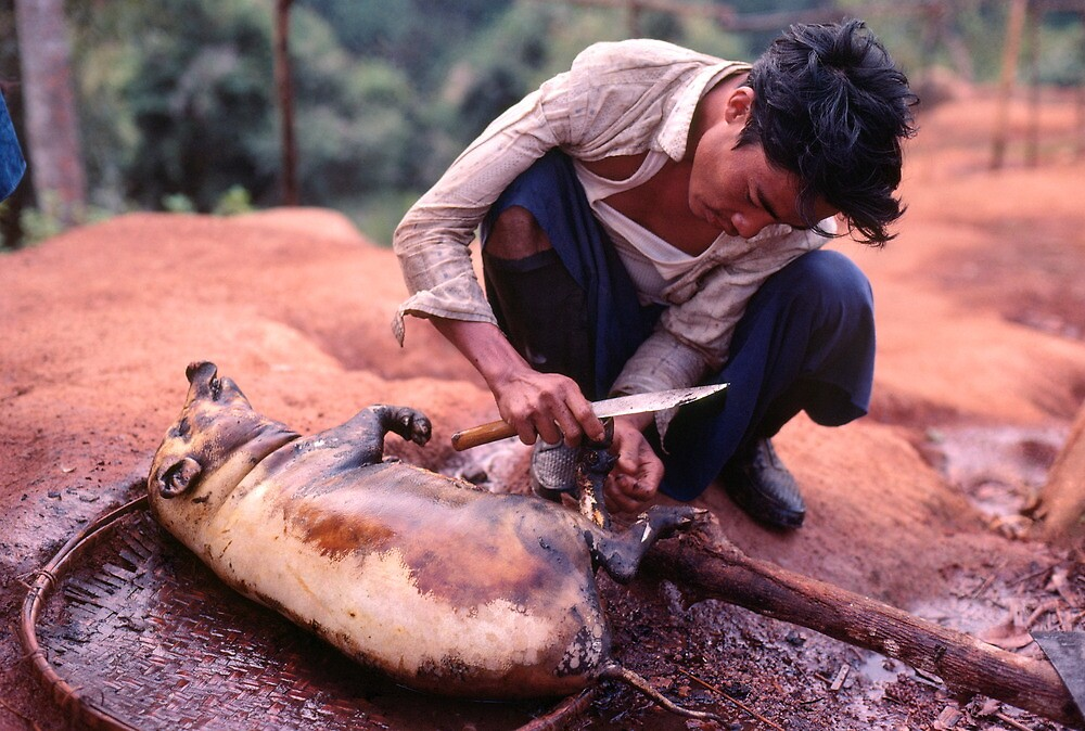 Sacrificial pig, Lisu new year, Thailand by John Spies