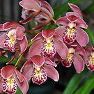 Orchid in full bloom by Brandie1
