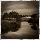 Willows Antique by Lorraine Seipel