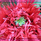Vanity Fair - Red Oriental Poppy in Mirrored Frame by BlueMoonRose