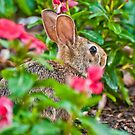 RABBITT IN THE GARDEN by RGHunt