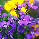 Color Splash by Evgenia Attia