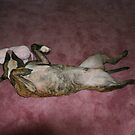 Sleepy Time by Alexandra Wise-Brogna