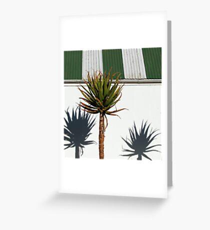 Shadow Play - Quiver Tree Greeting Card