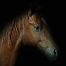 The Quarter Horse by julie anne  grattan