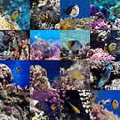 Red Sea Sealife Collage by hurmerinta