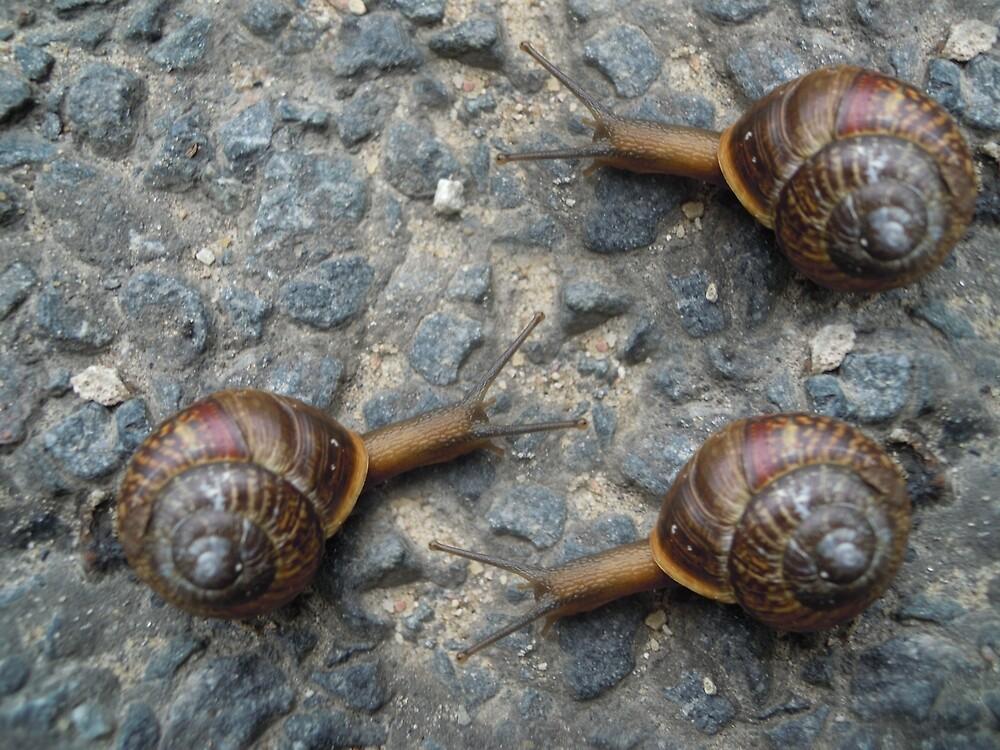 Snails  by Juhan Rodrik