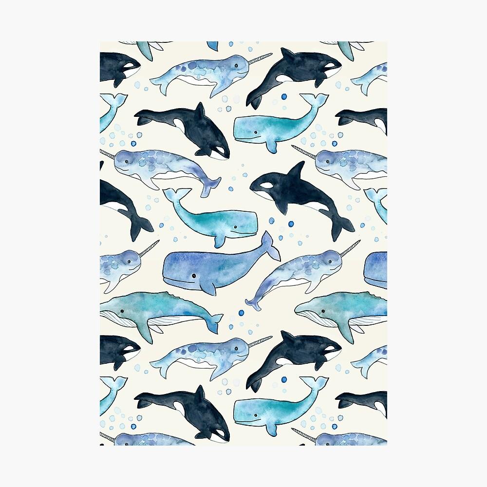 Ballenas, Orcas y Narwhals Lámina fotográfica