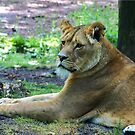Lion Lady by Janone