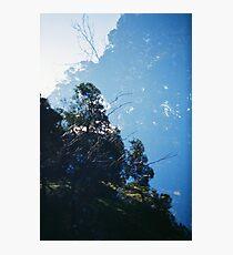 Koala Kingdom Photographic Print