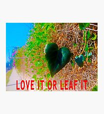 Love It Or Leaf It Photographic Print