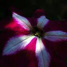 Reflection by Lozzar Flowers & Art