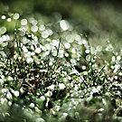 Glitter Grass by Avena Singh