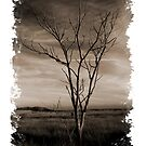 Silver Sands State Park - Lonely Tree by Tim Mannle