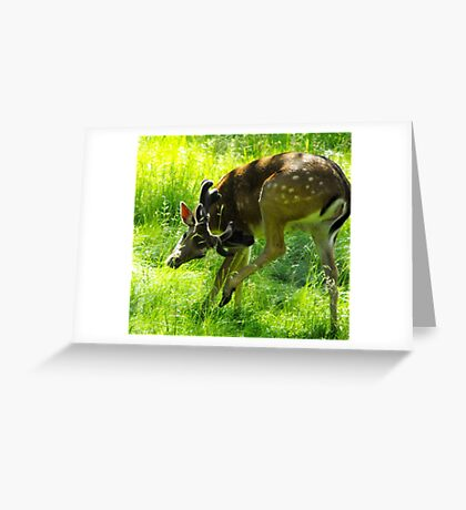 Need a Scratch Greeting Card
