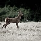 Fawn 2 by Alice Oates